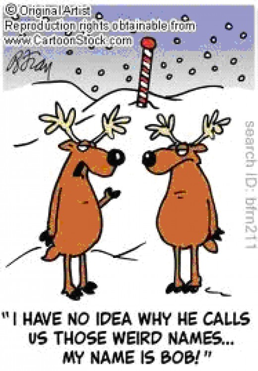 The reindeer's like to get away from the never ending snow.