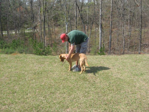 Dog Training can be much easier with smart dogs.