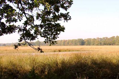 'De Tweelingen' : nature reserve near Schoonloo