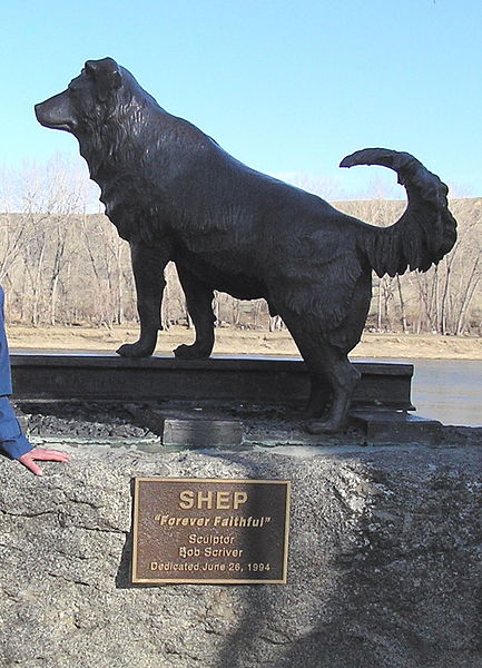 A statue of Shep in Fort Benton Montana sculpted by artist Bob Scriver