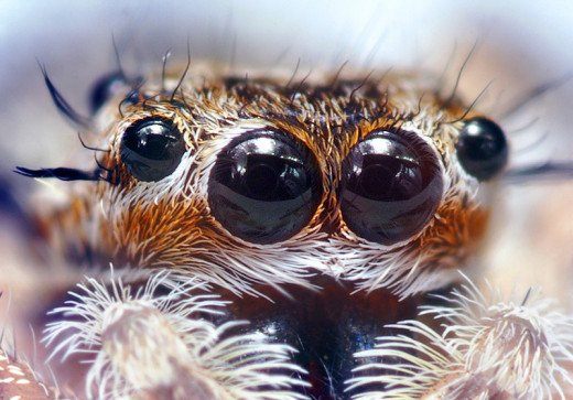 Four Pairs of Eyes, Four Layered Retina - Spider Sight is Visionary