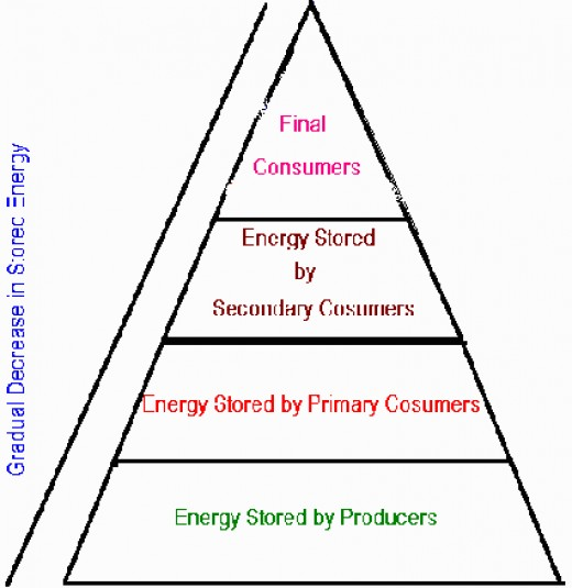 Plants are producers. Herbivores eat the plants. They are the primary consumers. Carnivores eat the herbivores. They are secondary consumers. Other carnivores eat them. They are the top of the chain. The creme de la creme. The ultimate consumers!