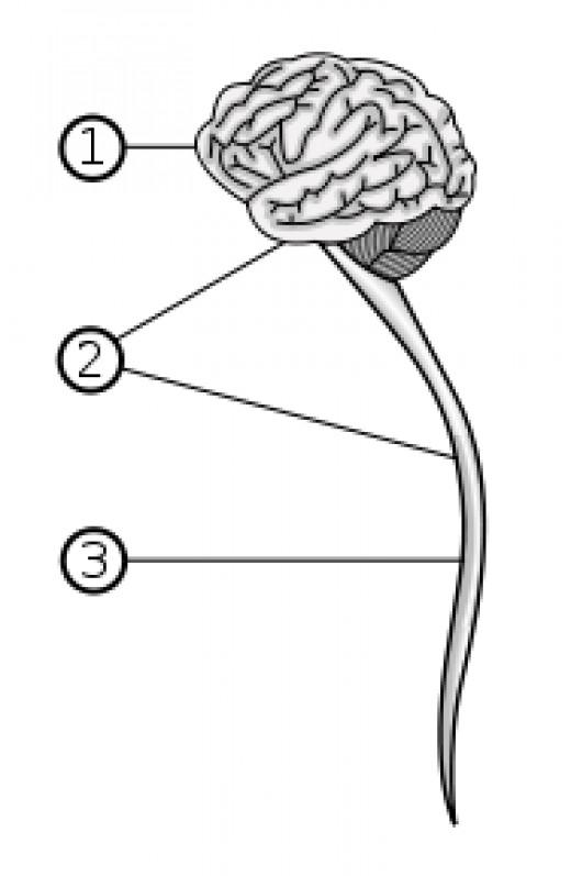 commons.wikimedia.org (public domain)