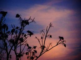 anxious leaves await their fate