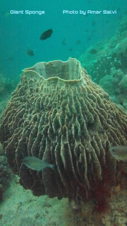 A Giant Sponge