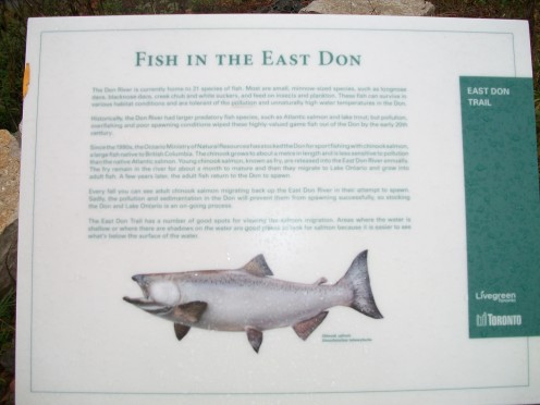 Interpretive panel, East Don River, Charles Sauriol Conservation Area, Toronto