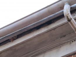Squirrel nest in the soffit of the roof.  Squirrels can cause large amounts of damage to homes.