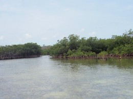 Mangrove swamp in the Bahamas
