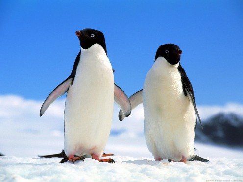 These innocent creatures know nothing about global warming so it's up to us to protect them.