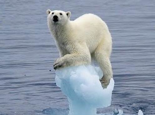The polar bear is barely hanging on!