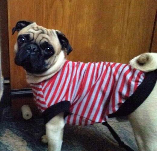 POGO My Pug :-D