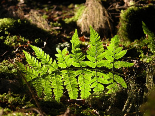Sunlight through autumn forest fern
