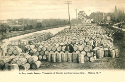 Apples - Erie Canal Freight in Medina, NY