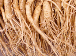 Ginseng: How to Recognize and Safely Transplant It