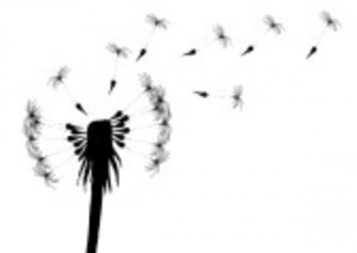 dandelion seed clip art