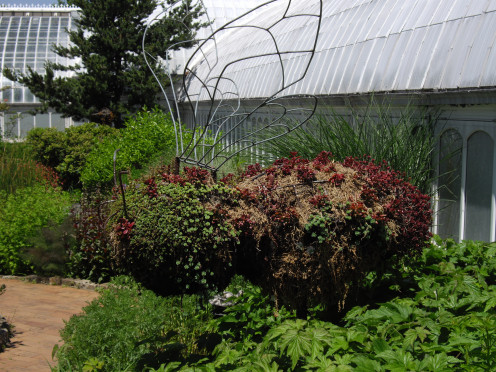 Bumble Bee Topiary in the Children's Discovery Garden at Phipps Conservatory.