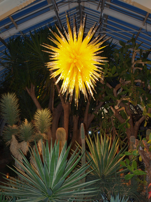 The Desert Room at Phipps Conservatory shimmers at night with this Dale Chihuly sculpture highlighting the cacti.
