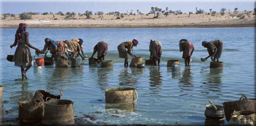Spirulina ladies harvesting spirulina from Lake Boudou Andja, Afrika. (Photos by Marzio Marzot from the FAO Report: The Future is an Ancient Lake, 2004).