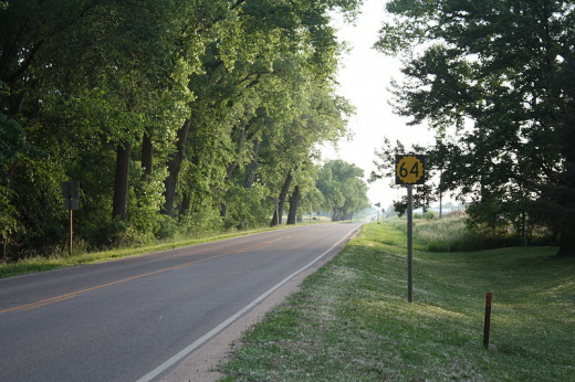 Tall trees lining Highway 60 near Pratt, Kansas.  It was in trees such as these that the author saw hundreds of webs of large spiders near Elk City Lake described in the column below.