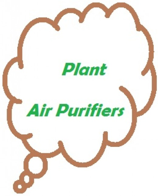 Plants have air purification properties that can  help improve your air quality.