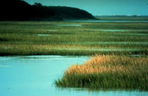 Salt Marshes are located in oceans and they can be destroyed by trash. Scientists have studied Marshes for decades on end.