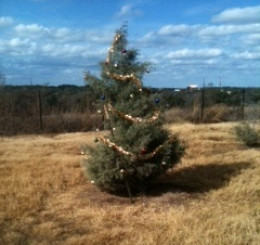 Our tree on a hill!