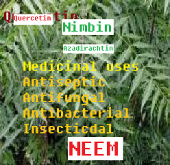 NEEM (Azadirachta indica) tree: Medicinal properties and worldwide uses