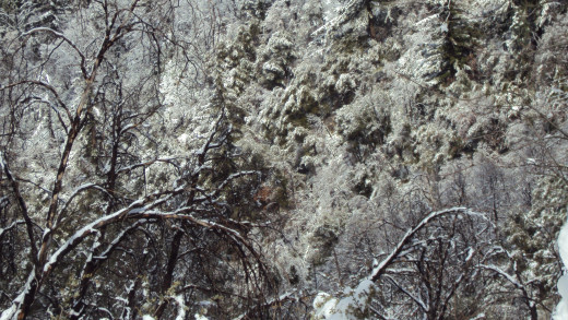 Snow encrusted trees are very mesmerizing.