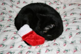 Wait a minute-that stocking was for the kids!  Naughty kitty.