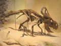 The Facts on the Protoceratops Dinosaur