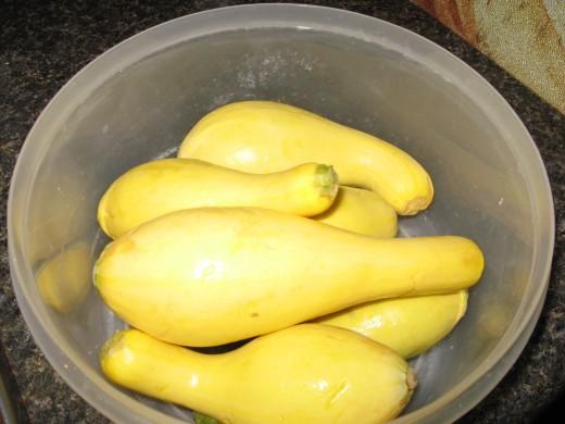 yellow straightneck squash
