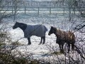 How to Take Care of a Horse in Winter