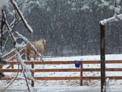 Poem - On a Snowflake's Back…