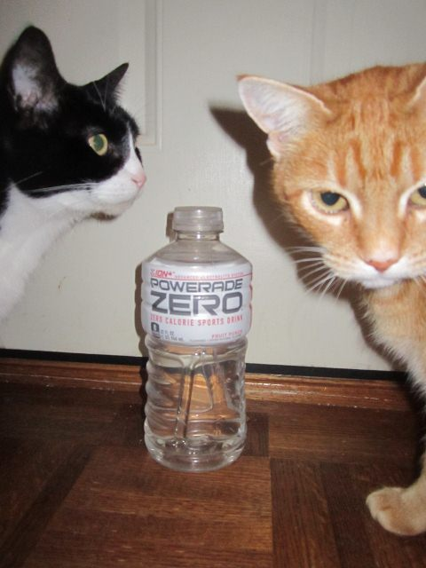 My 32 oz. water bottle. The cats are curious, of course.