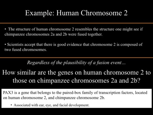 I chose this gene because it's conserved among organisms with a complex eye, so we expect the sequences to be similar.