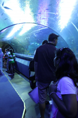 This 90 meter underwater tunnel takes one through the coral reefs to the deep oceans.