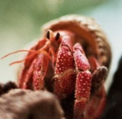 How to Make Your Own Hermit Crab Food