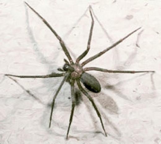 Bugs In Basement -- Identify Basement Bugs!