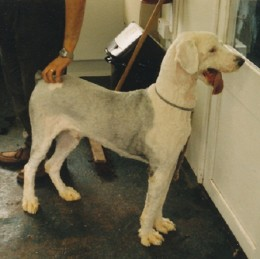 He looked and felt much better after a class of trainee groomers had worked on him