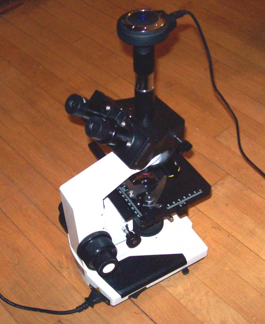 Compound microscope with a CCD video camera attached