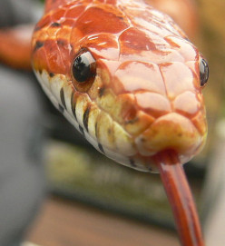 How to Feed a Pet Corn Snake