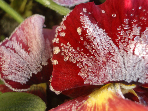 think morning frost on petals and recreate easily with caster sugar and egg whites.