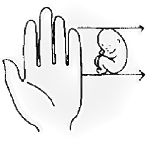 Fetus size in 12 weeks