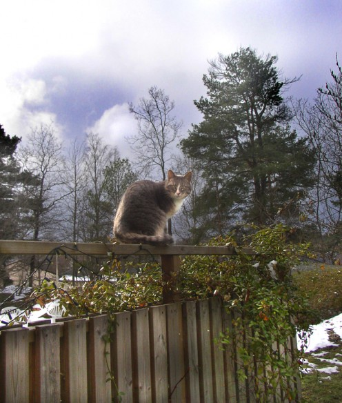 A cat sitting on a fence