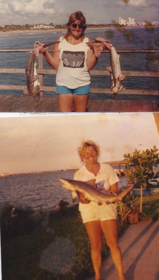 Top photo-Hammerhead Sharks Bottom Photo -Black Tip Shark
