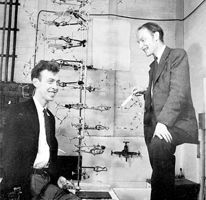 James Watson and Francis Crick began the development of genetic engineering with their newfound knowledge of DNA's structure