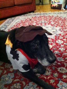 You tolerated so much to make me happy....even letting me dress you as Woody on Toy Story for Halloween. Rest in Peace, my big man.