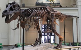 Sue, the T rex from Field Museum of Natural History, Chicago.