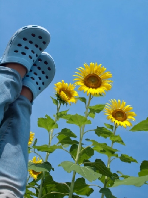 Standing on Sky of Sunflowers