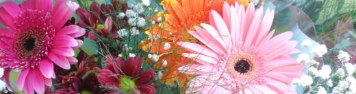 Flowers of Tel Aviv